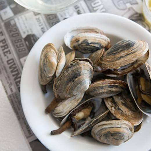 New England Steamers